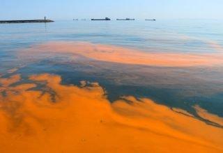 Marmara Denizi sarıya boyandı; nedeni tek hücreli ALG patlaması